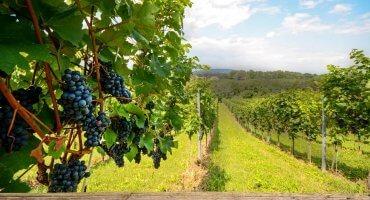 8 Days - Portugal Wine Tour