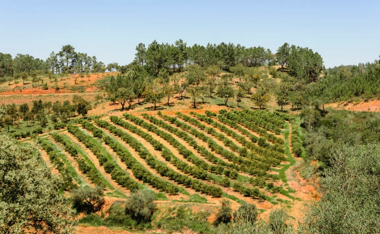 Alentejo is an amazing place if you're a fan of Nature and its vineyards are amazing!