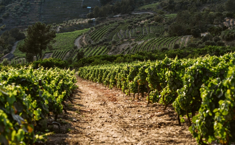 Port Wine vineyards are in Douro and are often surrounded by the famous Douro River